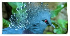 Victoria Crowned Pigeon Hand Towel by Daniel Hebard