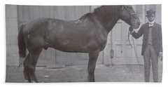 Vintage Photograph 1902 Horse With Handler New Bern Nc Area Hand Towel