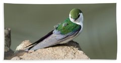 Violet-green Swallow Hand Towel by Mike Dawson