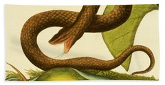 Viper Fusca Hand Towel by Mark Catesby