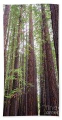 Walk Tall As Trees Hand Towel