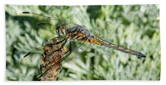 Warming-up - Darner Dragonfly Hand Towel