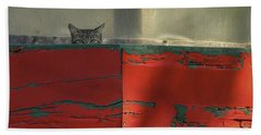 Watchful Cat Hand Towel