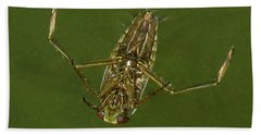 Water Boatman Bath Towel