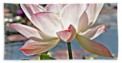 Water Lily Hand Towel by Catherine Alfidi