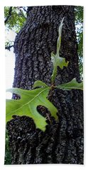 Hand Towel featuring the photograph Wekiwa Springs State Park Oakleaf Cluster by Chris Mercer