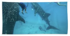 Whale Sharks Hand Towel by Tim Fitzharris