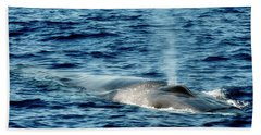 Bath Towel featuring the photograph Whale Watching Balenottera Comune 1 by Enrico Pelos