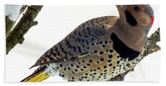 What Was That - Northern Flicker Hand Towel