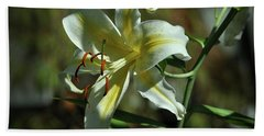 White And Yellow Asiatic Lilly No 1 Hand Towel