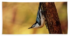 White-breasted Nuthatch Hand Towel by Darren Fisher