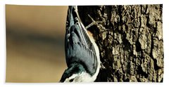White-breasted Nuthatch On Tree Hand Towel