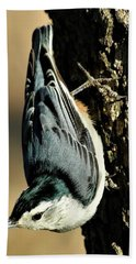 White-breasted Nuthatch On Tree Bath Towel by Sheila Brown