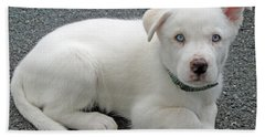 White Dog Blue Eyes Hand Towel