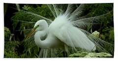 Bath Towel featuring the photograph White Egret Displaying by Myrna Bradshaw