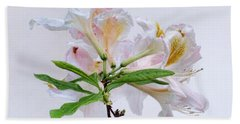 White Exbury Azalea Blooms Hand Towel by Louise Kumpf