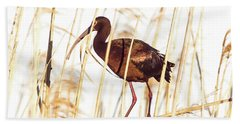 White Faced Ibis In Reeds Bath Towel by Robert Frederick