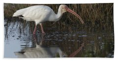 White Ibis Feeding Bath Towel