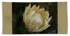Hand Towel featuring the photograph White King Protea By Kaye Menner by Kaye Menner