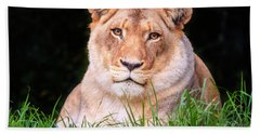 Hand Towel featuring the photograph White Lion by Alexey Stiop