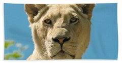 White Lion Hand Towel by Scott Carruthers