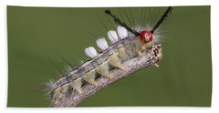 White-marked Tussock Moth Bath Towel