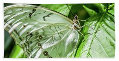 Hand Towel featuring the photograph White Morpho Butterfly by Joann Copeland-Paul