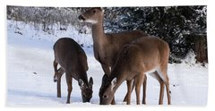 White-tailed Deer - 8855 Hand Towel