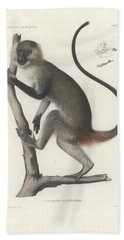 White Throated Guenon, Cercopithecus Albogularis Erythrarchus Hand Towel