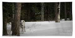 White Wolf Hand Towel by Brad Allen Fine Art