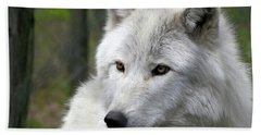 White Wolf With Golden Eyes Hand Towel