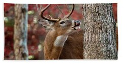 Whitetail #682 Bath Towel