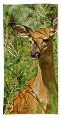 Whitetail Doe Painterly Hand Towel