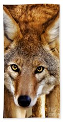 Hand Towel featuring the photograph Wild Coyote by Adam Olsen