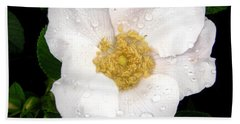 Hand Towel featuring the photograph Wild Rose by Stephanie Moore