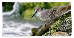 Hand Towel featuring the photograph Willet By The Sea by Paul Mashburn