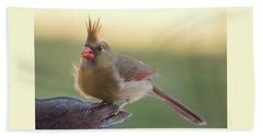 Bath Towel featuring the photograph Wind Blown Cardinal  by Terry DeLuco