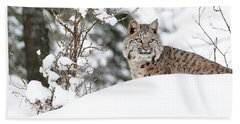 Winter Bobcat Hand Towel by Steve McKinzie