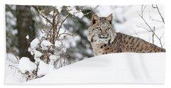 Hand Towel featuring the photograph Winter Bobcat by Steve McKinzie