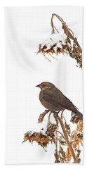 Winter Cowbird On Sunflower Bath Towel