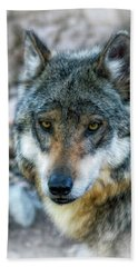 Wolf Gaze Hand Towel by Elaine Malott