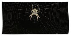 Hand Towel featuring the photograph Wolf Spider And Web by Mark McReynolds