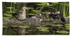 Wood Duck With Her Ducklings Bath Towel