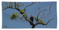 Yawkey Wildlife Reguge - American Bald Eagle Hand Towel by Suzanne Gaff