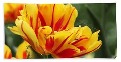 Hand Towel featuring the photograph Yellow And Red Triumph Tulips by Rona Black