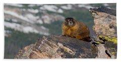 Yellow Bellied Marmot Hand Towel