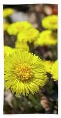 Bath Towel featuring the photograph Yellow Coltsfoot Flowers by Christina Rollo