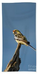 Bath Towel featuring the photograph Yellow Crimson Rosella by Douglas Barnard
