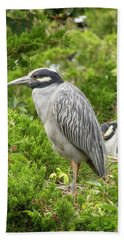 Yellow-crowned Night Heron Bath Towel