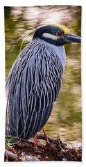 Hand Towel featuring the photograph Yellow-crowned Night-heron by Steven Sparks